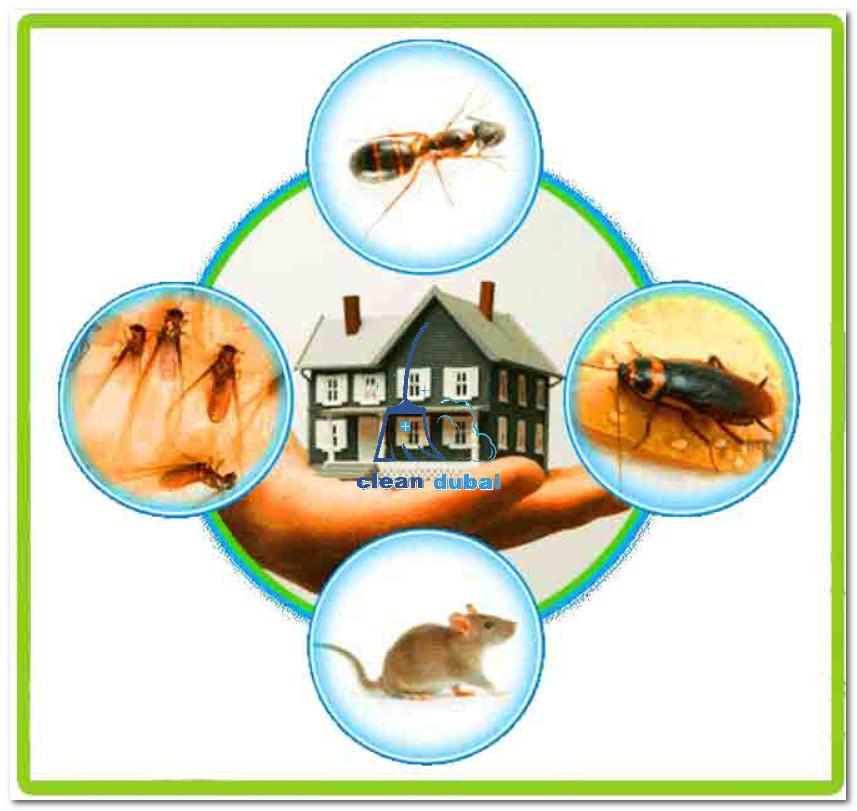 ارخص شركة مكافحة الحشرات في دبي