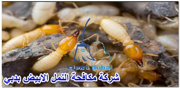 شركة مكافحة النمل الابيض بدبي