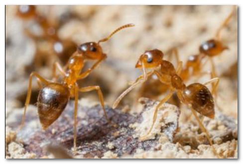 أفضل شركة مكافحة النمل