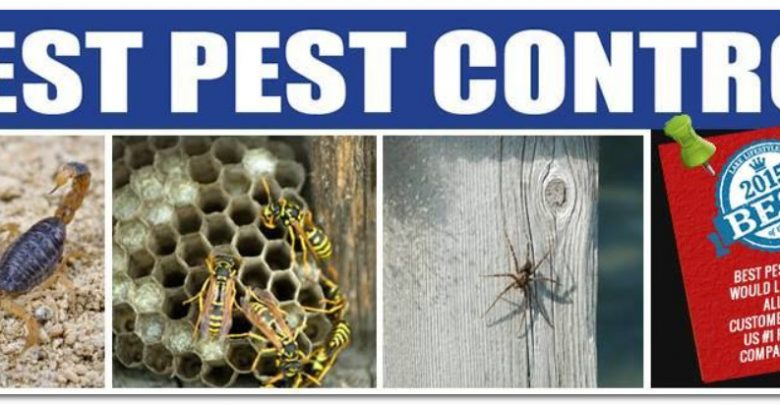 افضل شركة مكافحة حشرات